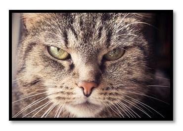 Angry Cat.jpg