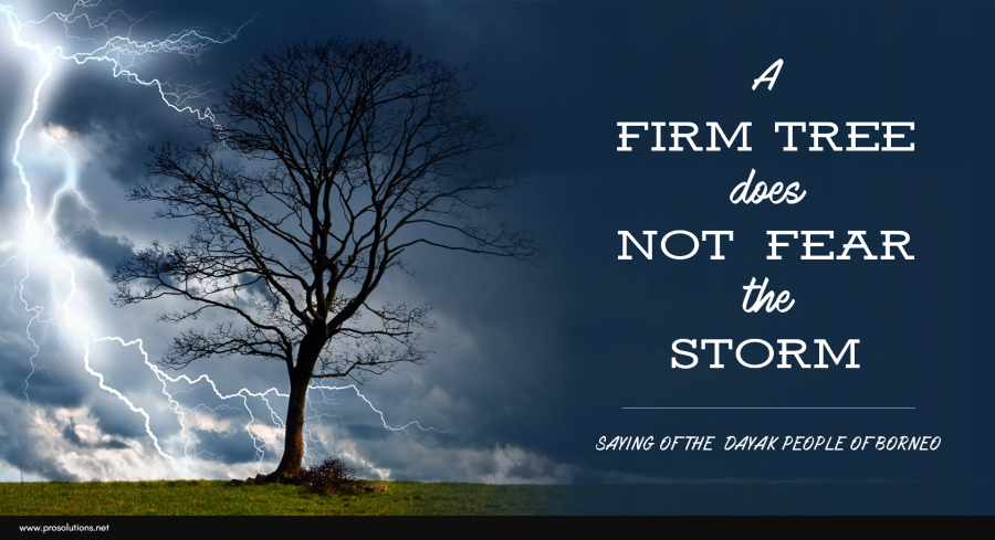 ProSolutions - Firm Tree Does Not Fear
